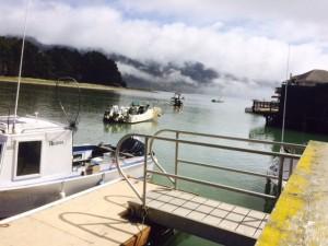 bolinas wharf fog